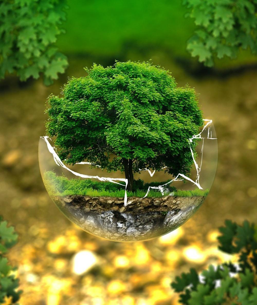 MF1971_3: Normativa y política interna de gestión ambiental de la organización