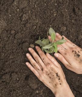 Explotaciones agrarias en agricultura ecológica